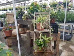 Greenhouse Nicks Greenhouse