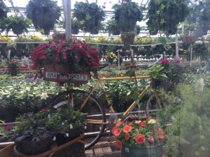 Bicycle and flowers Nicks Greenhouse