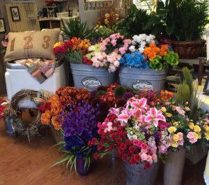 Cut flowers Nicks Greenhouse