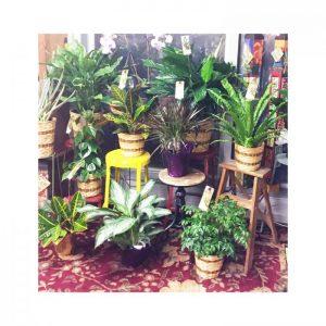Memorial plants at Nicks Greenhouse