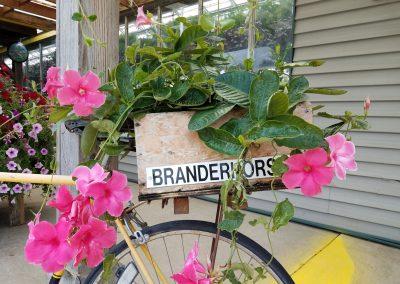 Branderhgorst-bike